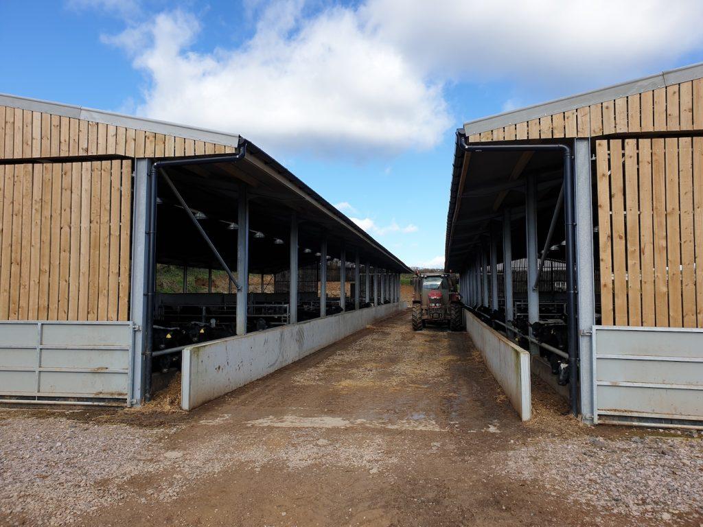 Cattle Noise Impact Assessment